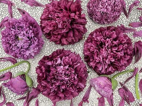 Purple Peony  - Poppy