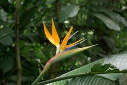 Flower from Brazil