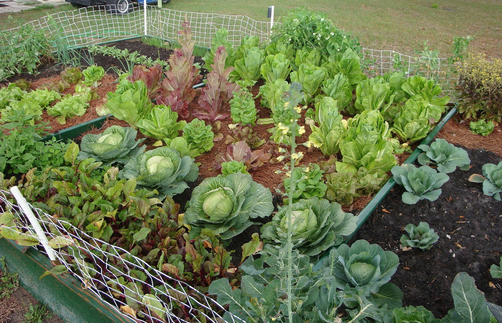 Vegetable Garden (Small)