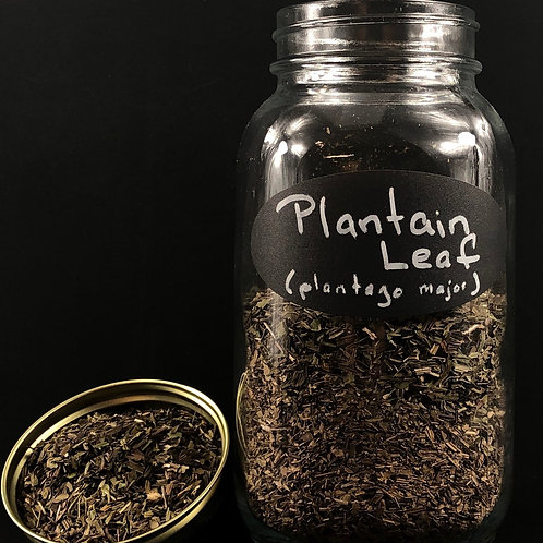 Plantain Leaf   ORGANIC   (Sold per ounce)
