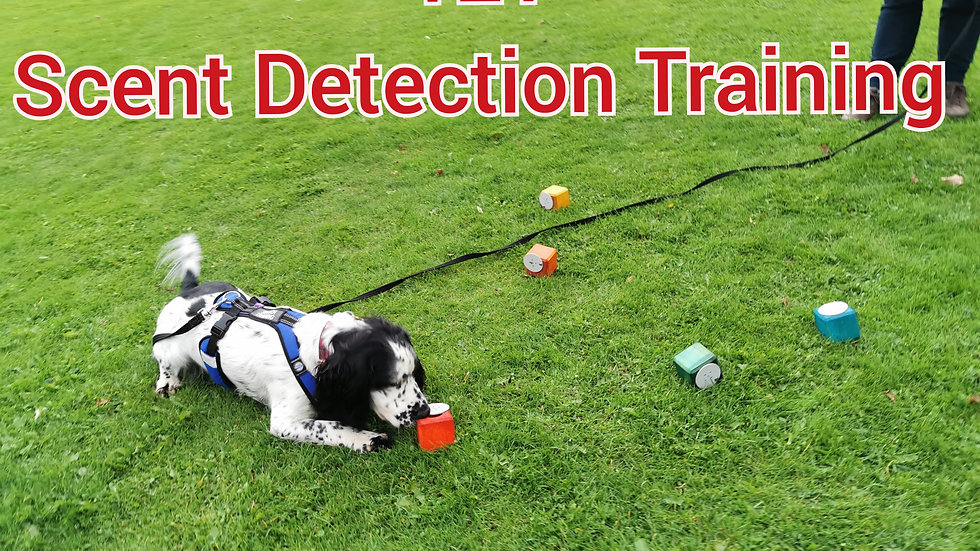 121 Scent Detection Training
