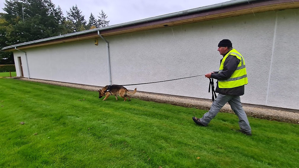 Mantrailing Training Sessions