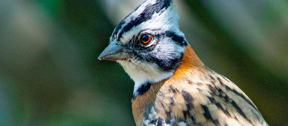 Las 180 especies de aves de la Reserva Frente Roja