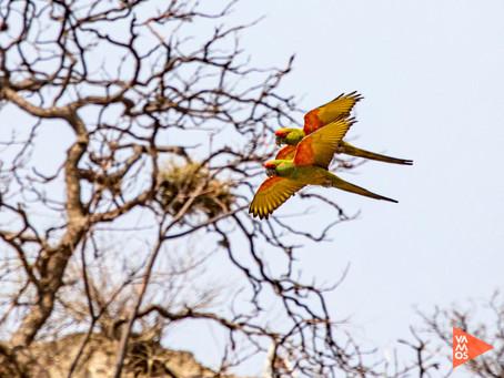 Reserva Frente Roja: maravilla de la conservación en Bolivia