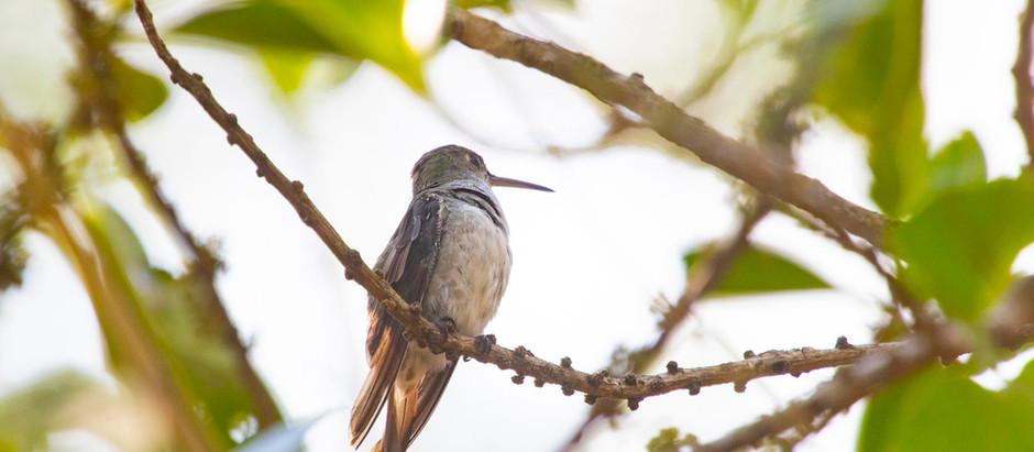 La supervivencia de los colibríes