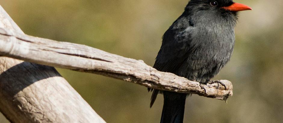 ¿Qué es el 'birdwatching' u 'observación de aves'?
