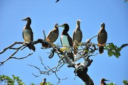 More birding options
