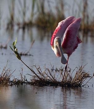 Observacion de aves Rio Lagartos - Yucatan Mexico – tour con guia – aves - Naturaleza - Cultura - fotografia de naturaleza – comunidad maya
