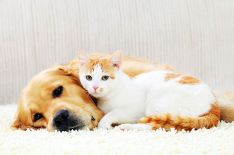 Dog and kitten laying on clean carpet