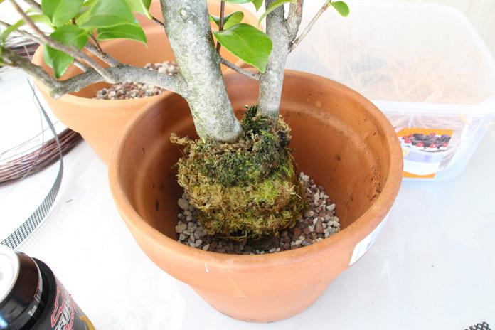 Remove plastic and plant in scoria