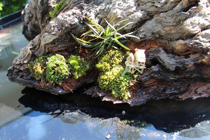 Detail of companion plants