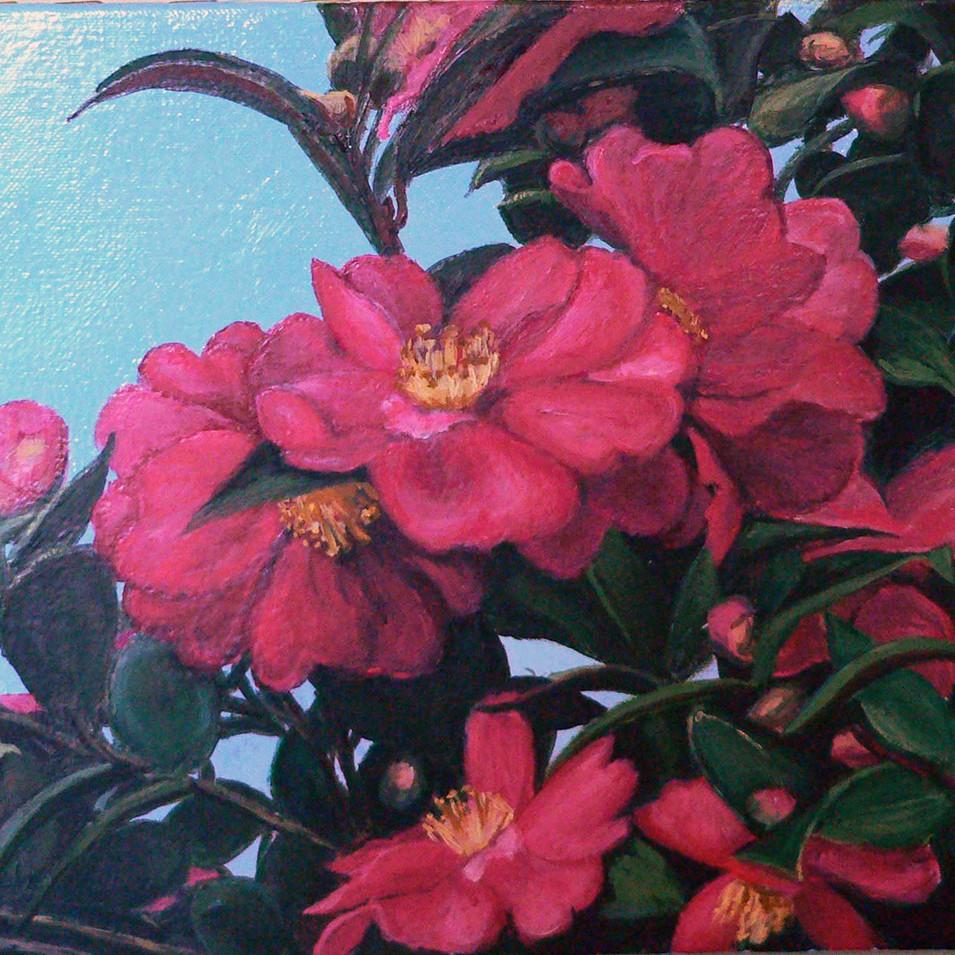 Winter's Camellias