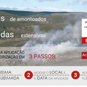 Registe-se na App do ICNF e peça autorização em 3 passos para fazer queimadas em segurança