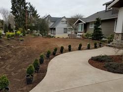 Plant Placement 2