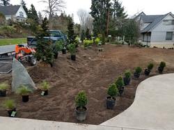 Plant Placement 1