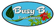 Busy B.jpg