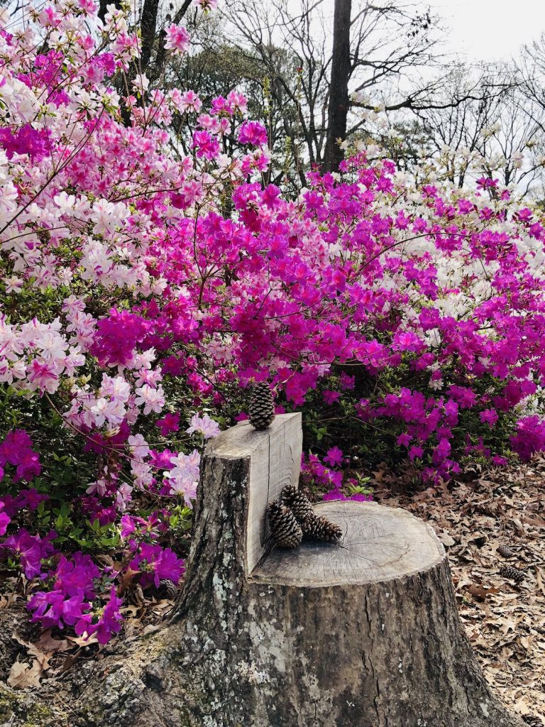 A stump seat surrounded by pink flowers at the Norfolk Botanical Gardens.