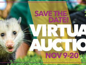 Zoo's Virtual Auction Offers Rare and Exclusive Opportunities