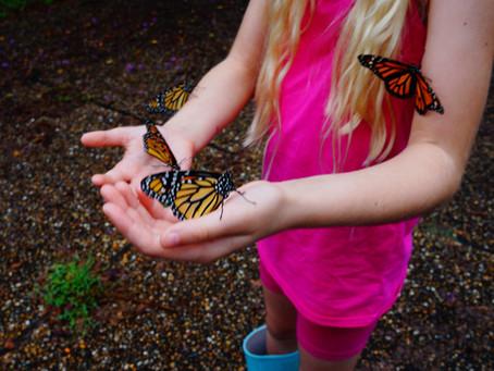 A Mom's Adventure in Butterflies