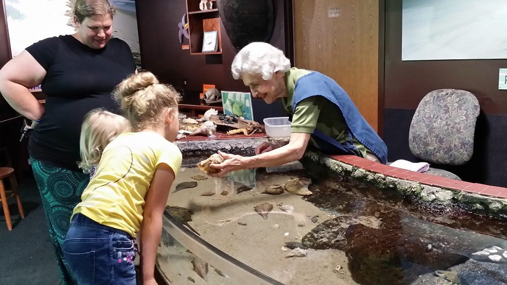 Virginia Gall is showing a whelk at the touch tank.