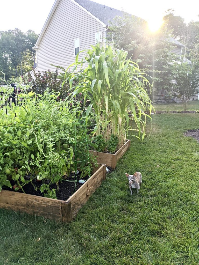 A small dog in a yard with a garden