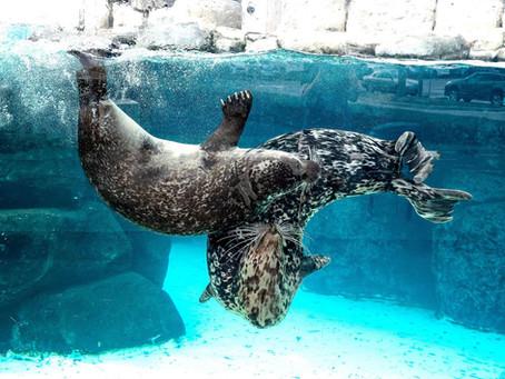 The Animals are Still Swimming at the Virginia Aquarium