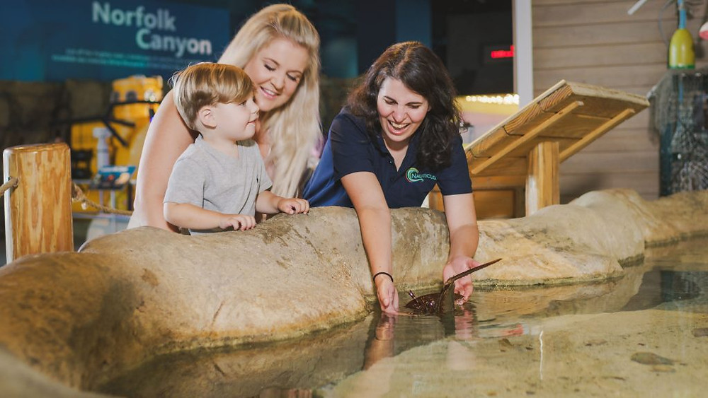 A Nauticus docent shows a horseshoe crab to a Mother and child.