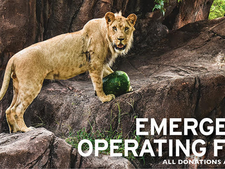 Pandemic and Heat Wave Causes Zoo to Alter Operations