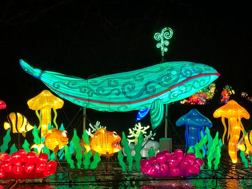 The Asian Lanterns exhibit at the Norfolk Botanical Gardens, a lit up whale swims over lit up mushrooms and fish
