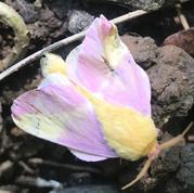 Plants that Attract Moths