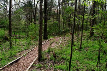 HT trail.jpg