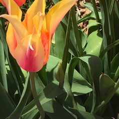 Fall Plant and Bulb Sale