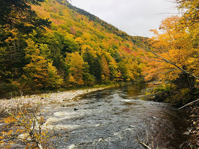 Heritage Margaree River