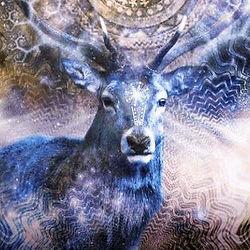 Sonja-deer.jpg