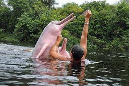 delfin-rosado-A.jpg