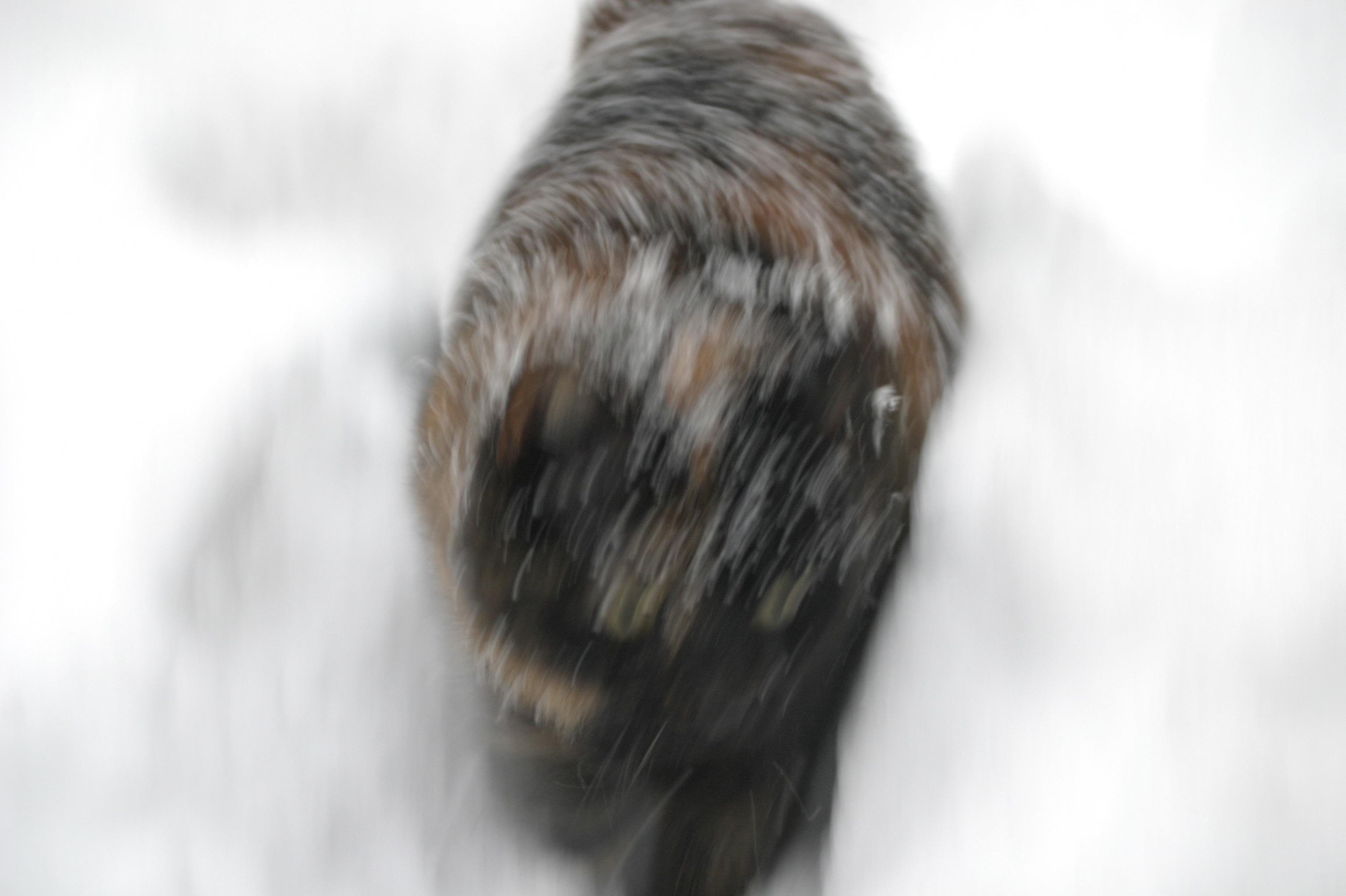 Sneeuwchaos (27).JPG