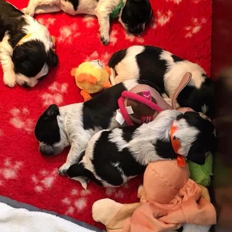 De pups groeien goed