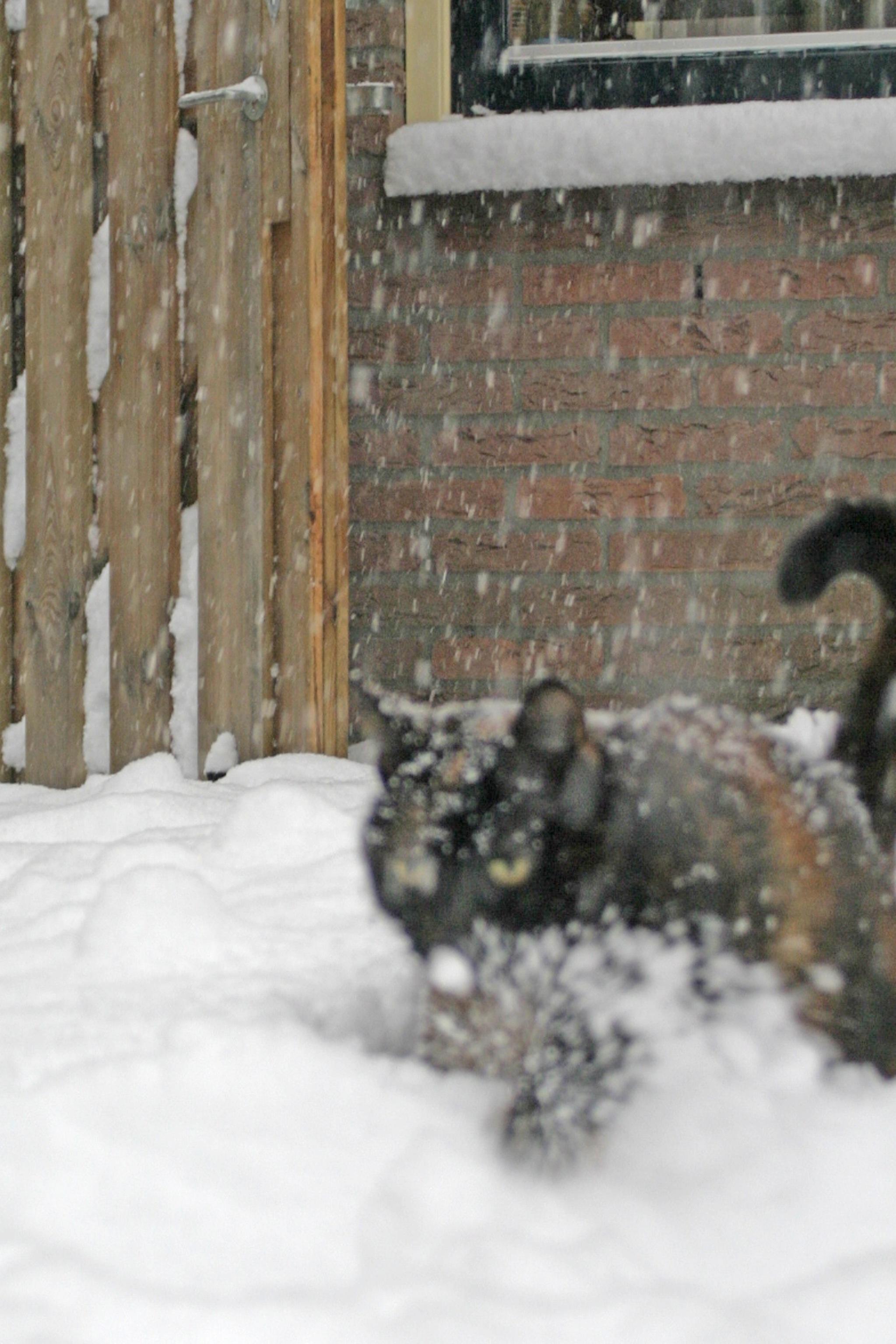 Sneeuwchaos (31).JPG