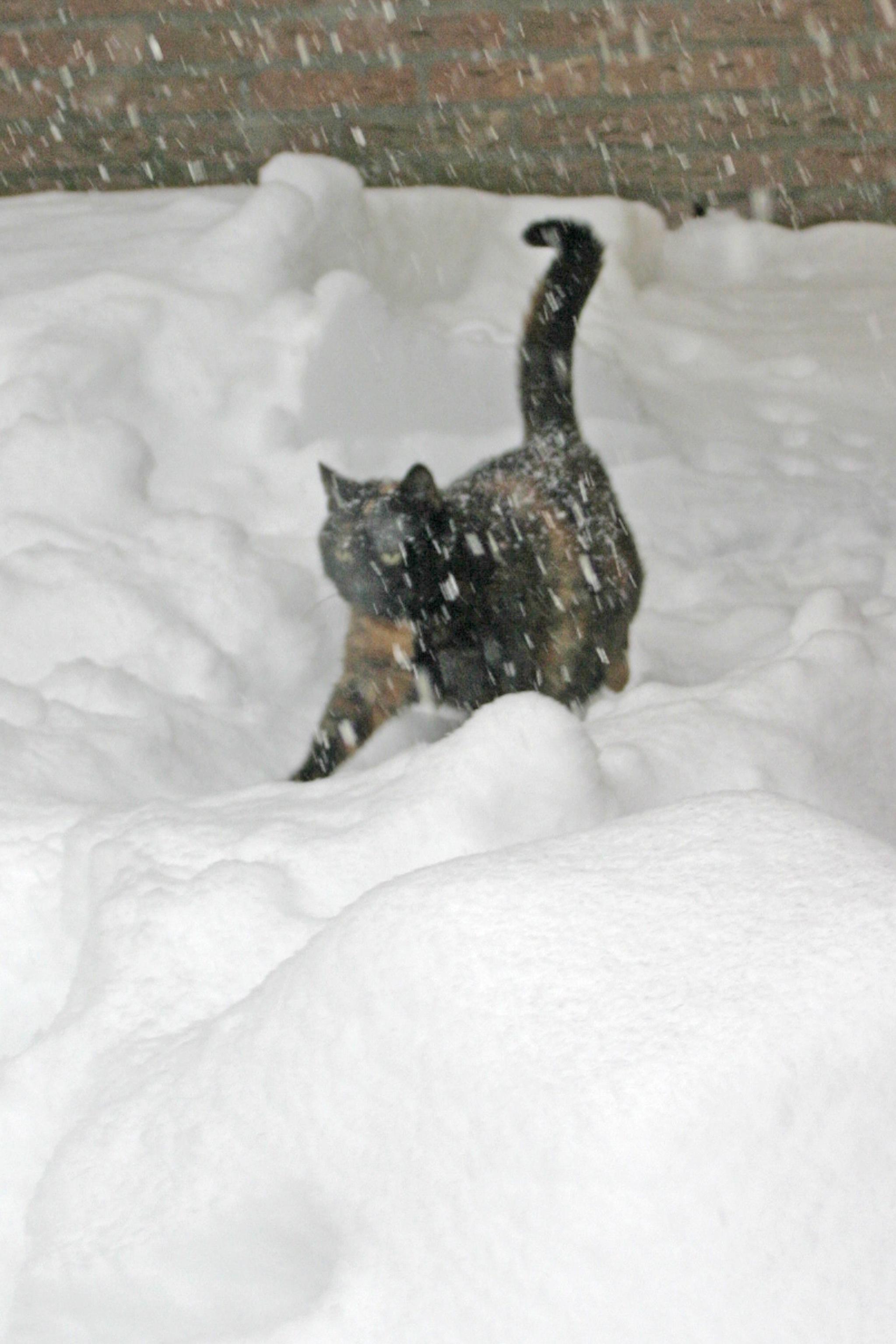 Sneeuwchaos (30).JPG