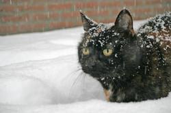 Sneeuwchaos (28).JPG