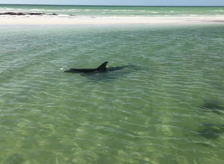 Dolphin Up Close and Beautiful
