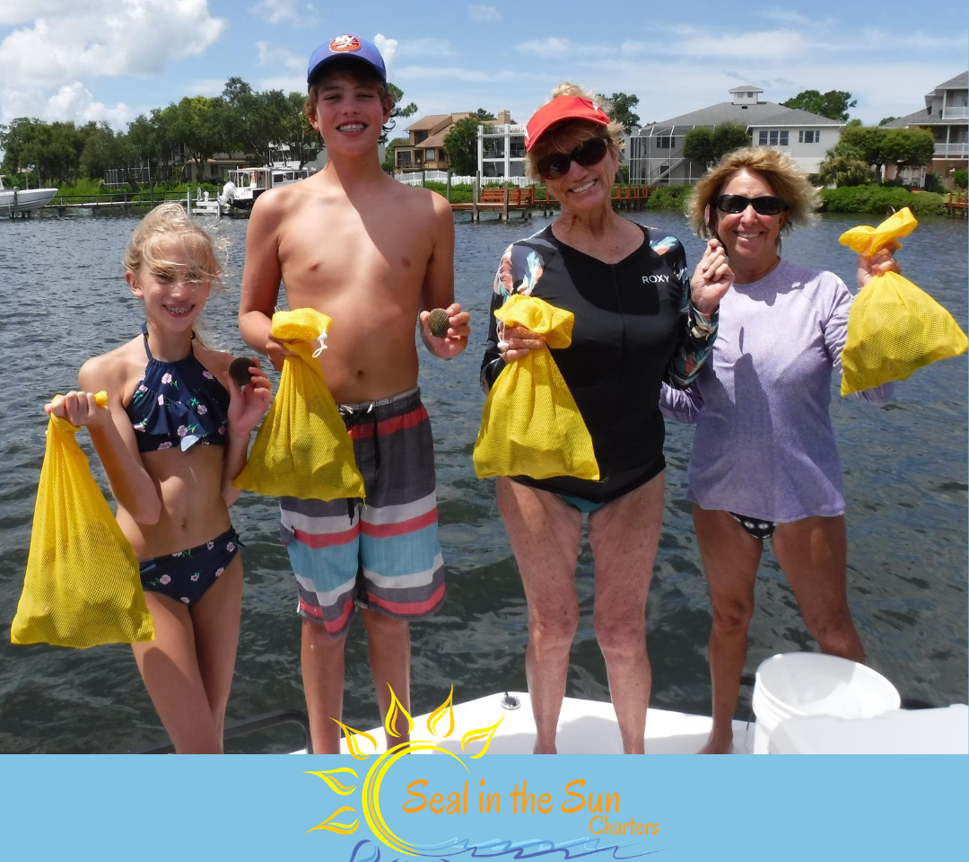 Scalloping St Pete