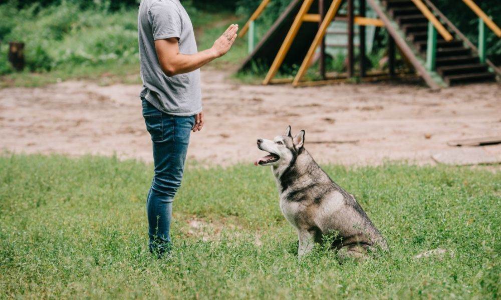 The Basic Commands To Teach Your Dog
