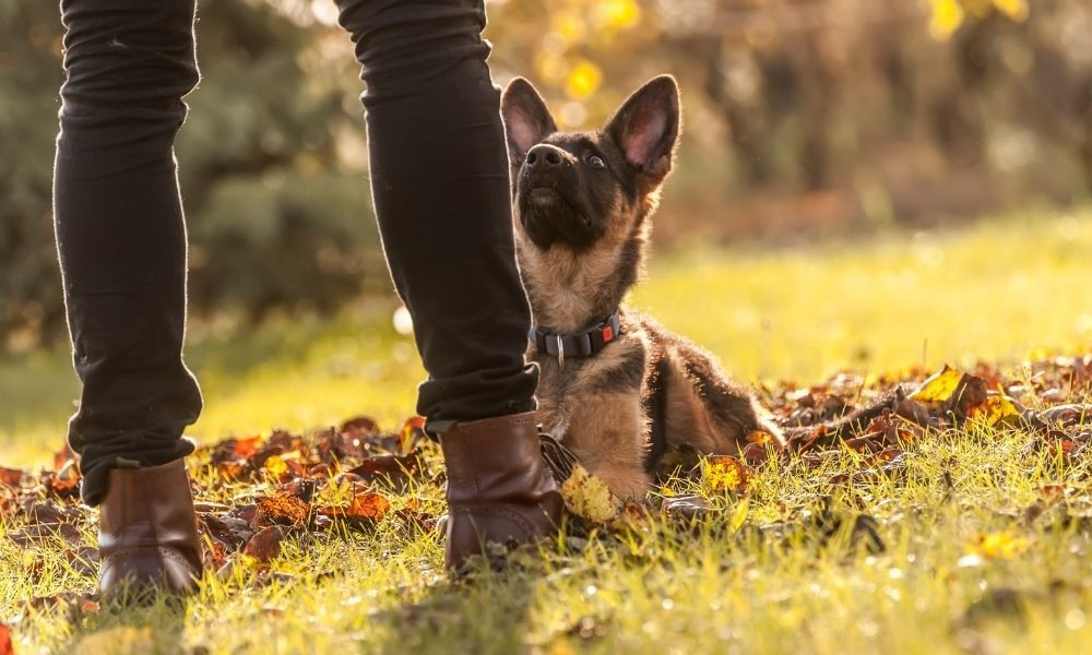 How To Create a Better Relationship Between You and Your Dog