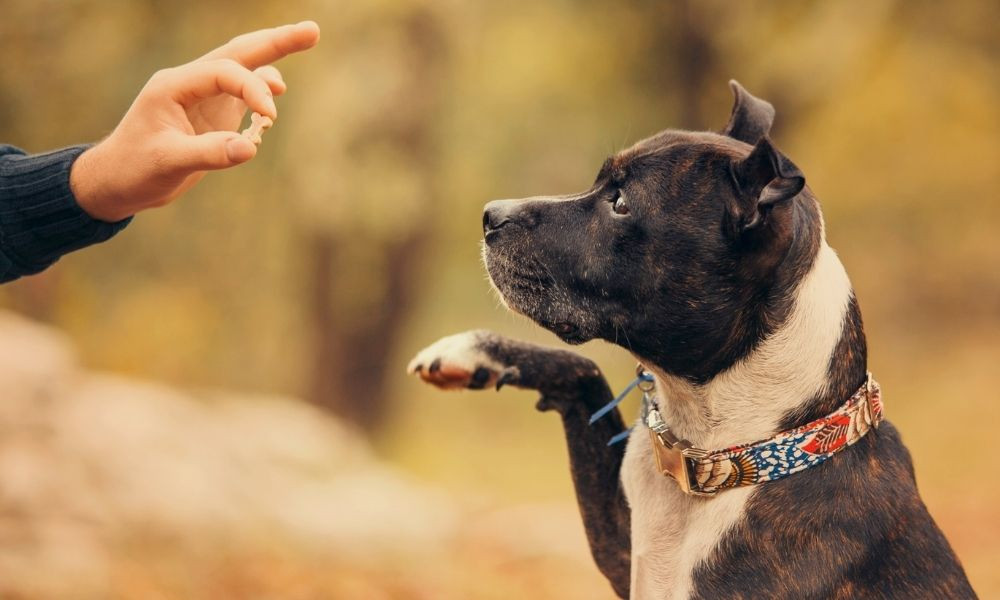 Detrimental Dog Training Mistakes You Need To Avoid