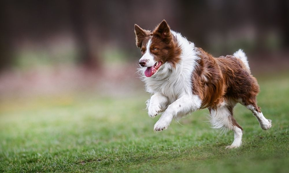 How To Stop Behavior Problems in Dogs