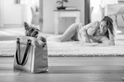Yorkshire Terrier - London
