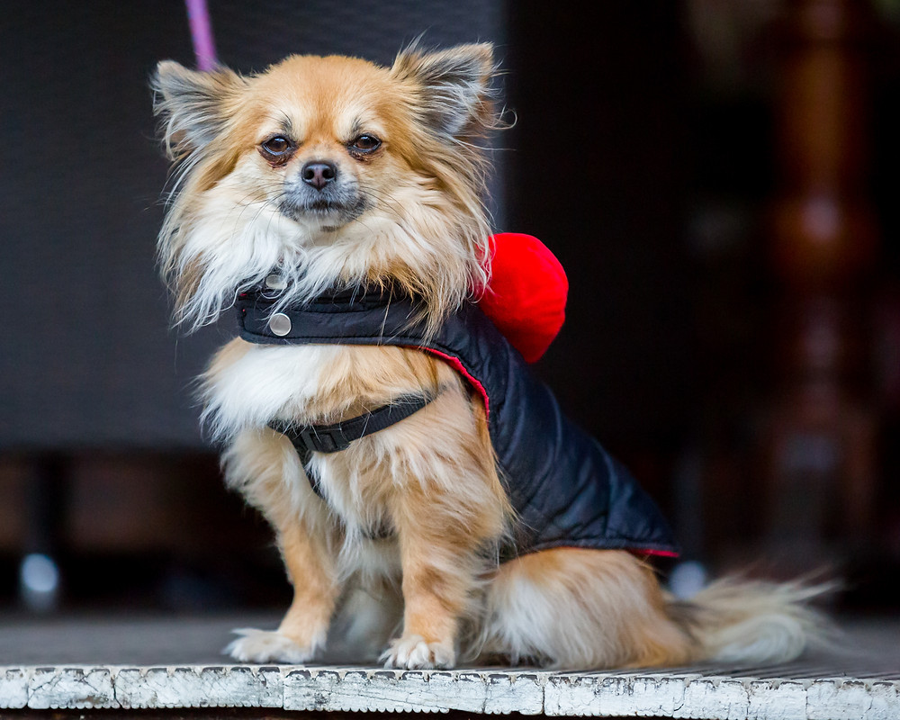 Dog photography in London. All Dogs Matter Valentines day Charity Event.
