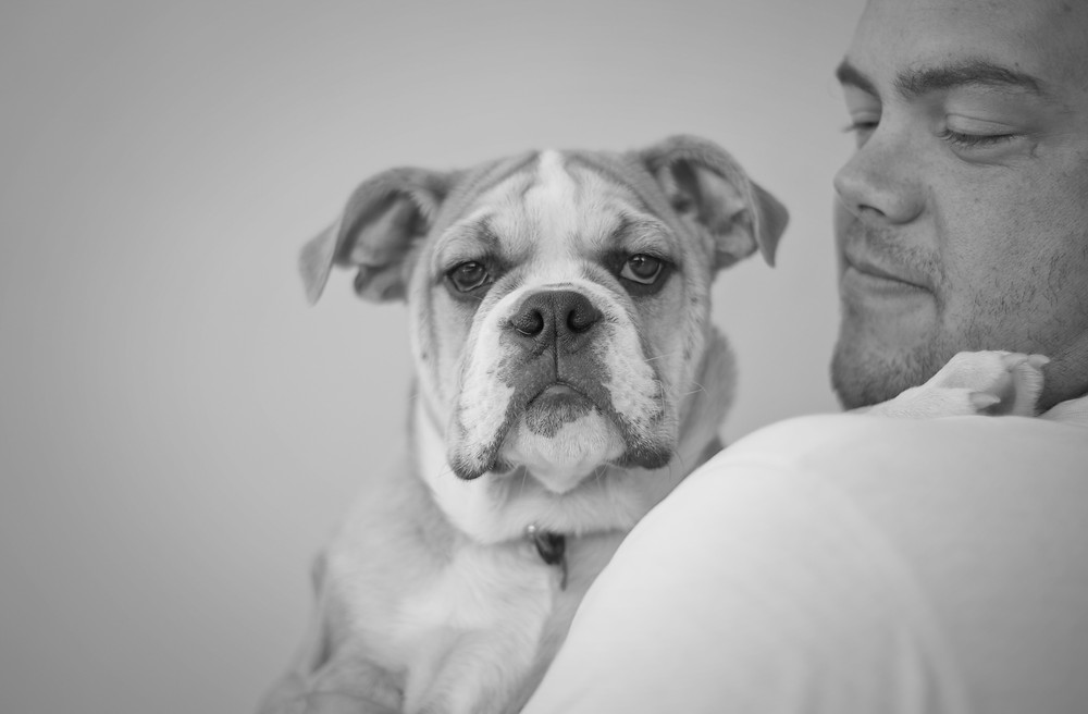 Dog photography in Cape Town. Hugo the British Bulldog in black and white.