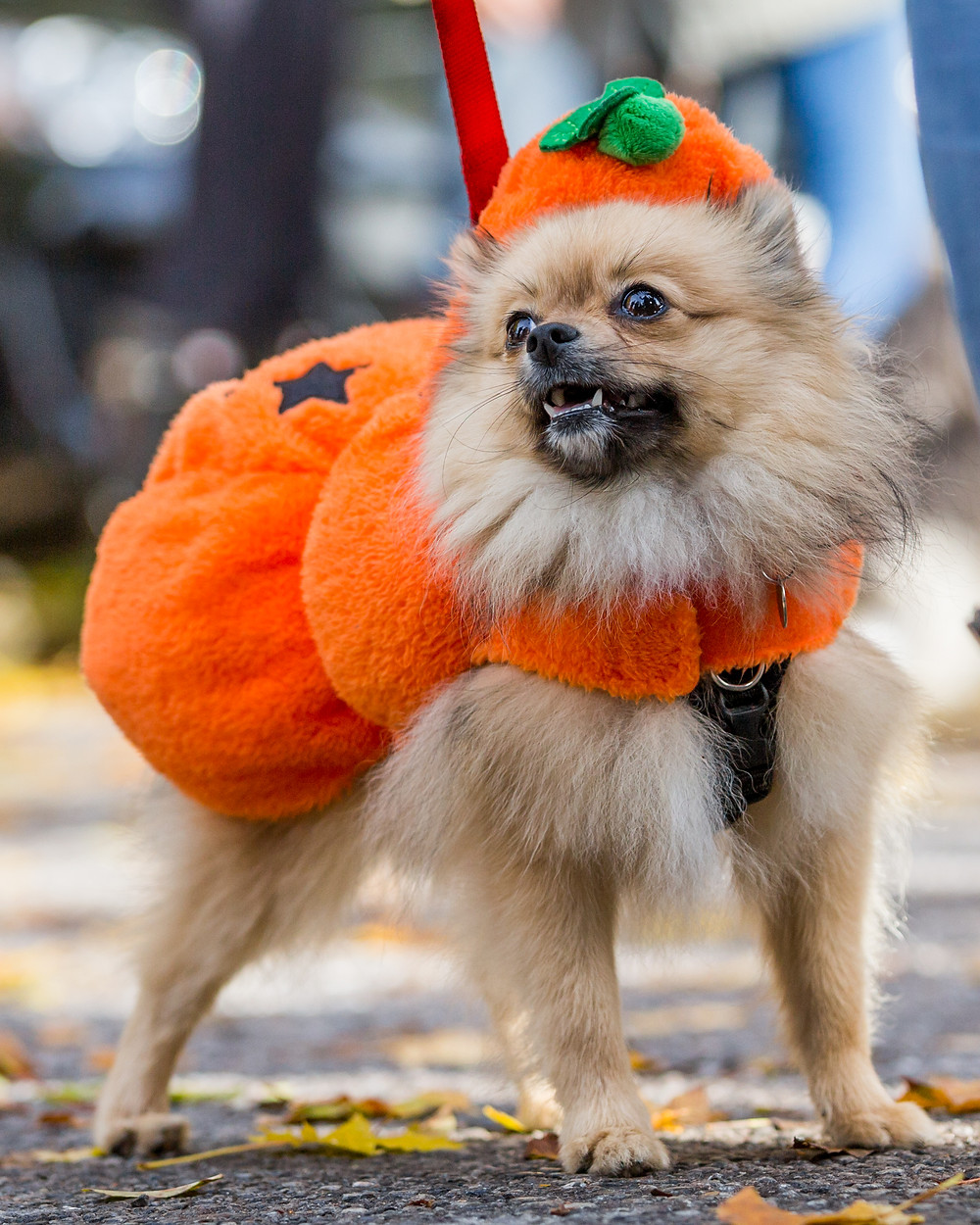 Dog photography in London. All Dogs Matter Halloween Charity Event. Scary halloween dog